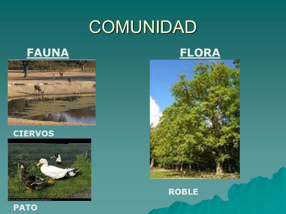 COMUNIDAD FAUNA FLORA CIERVOS ROBLE PATO
