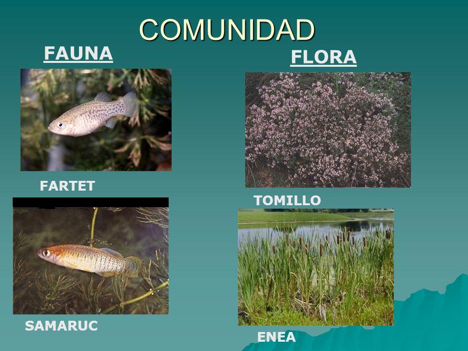 COMUNIDAD FAUNA FLORA FARTET TOMILLO SAMARUC ENEA