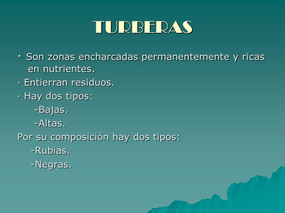 TURBERAS · Son zonas encharcadas permanentemente y ricas en nutrientes. · Entierran residuos. · Hay dos tipos: