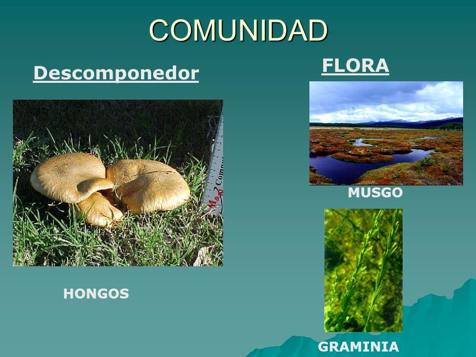 COMUNIDAD FLORA Descomponedor MUSGO HONGOS GRAMINIA