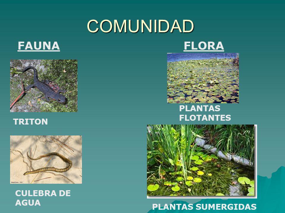 COMUNIDAD FAUNA FLORA PLANTAS FLOTANTES TRITON CULEBRA DE AGUA