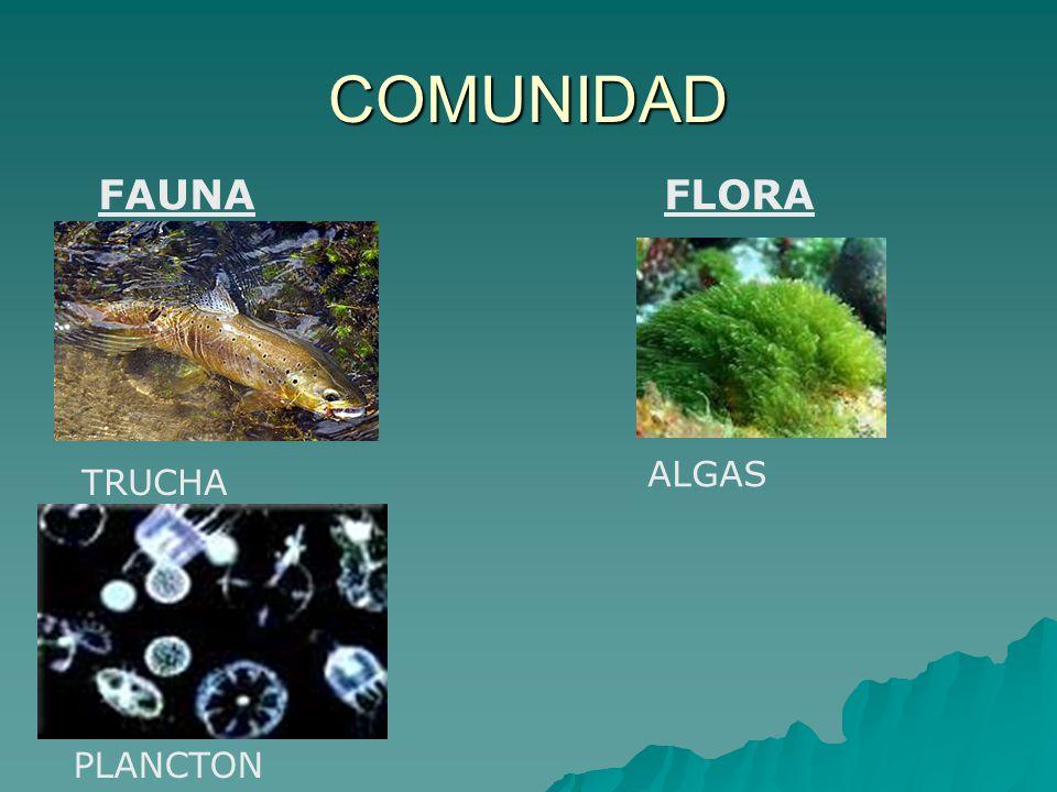 COMUNIDAD FAUNA FLORA ALGAS TRUCHA PLANCTON