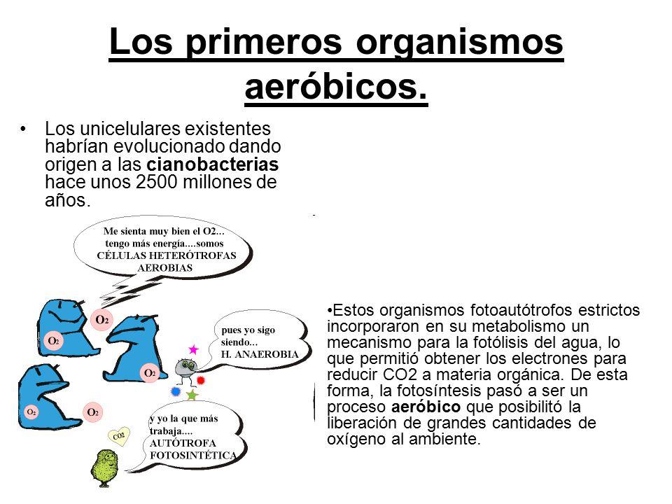 Los primeros organismos aeróbicos.