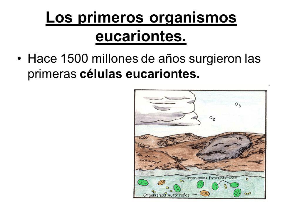 Los primeros organismos eucariontes.
