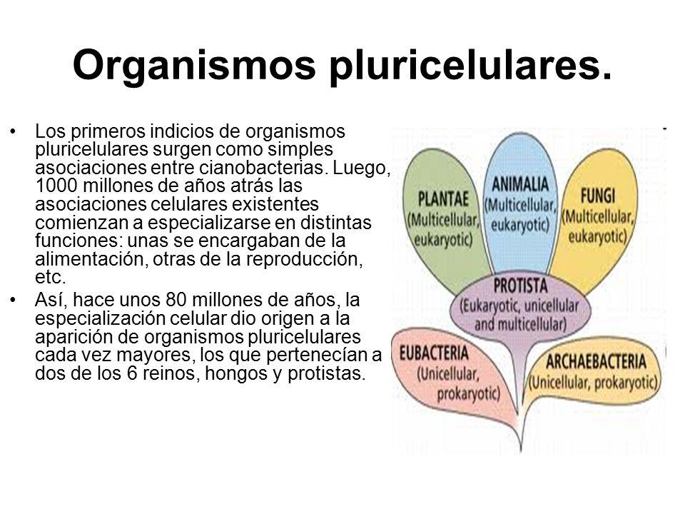 Organismos pluricelulares.