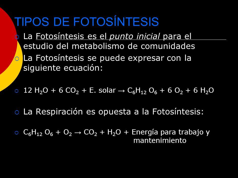 TIPOS DE FOTOSÍNTESIS La Fotosíntesis es el punto inicial para el estudio del metabolismo de comunidades.