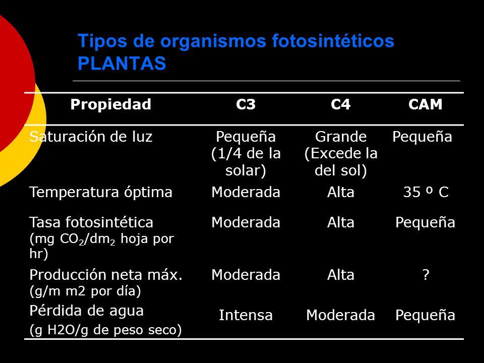 Tipos de organismos fotosintéticos PLANTAS