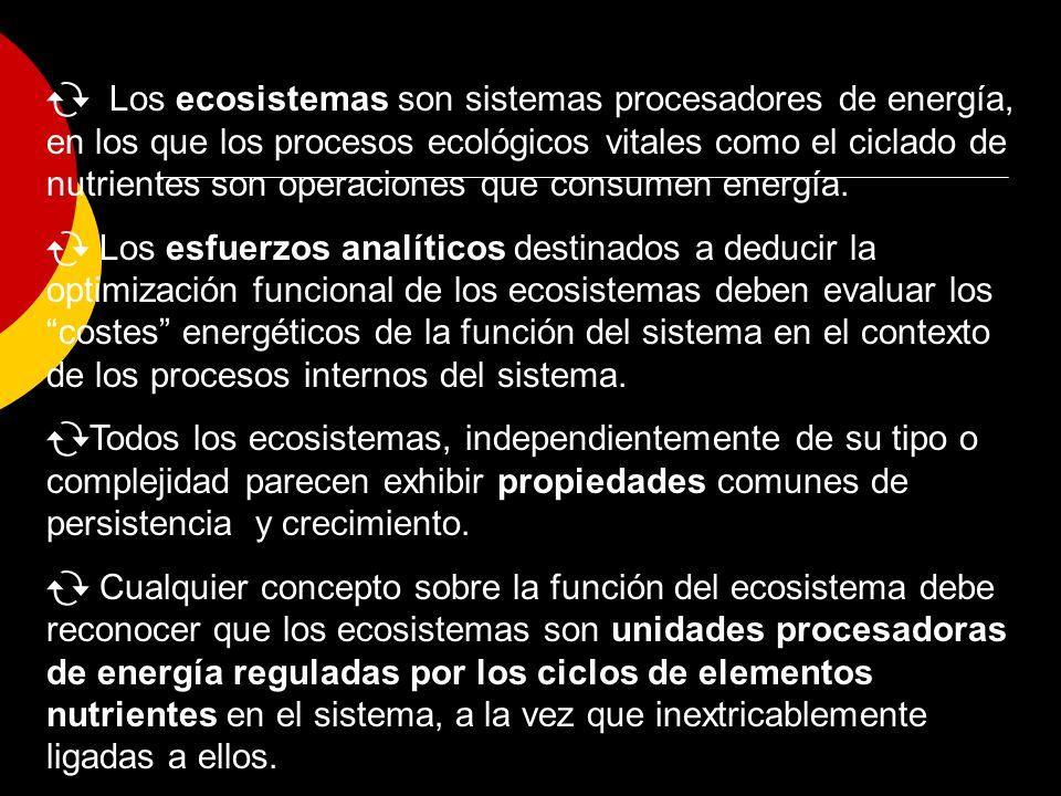 Los ecosistemas son sistemas procesadores de energía, en los que los procesos ecológicos vitales como el ciclado de nutrientes son operaciones que consumen energía.