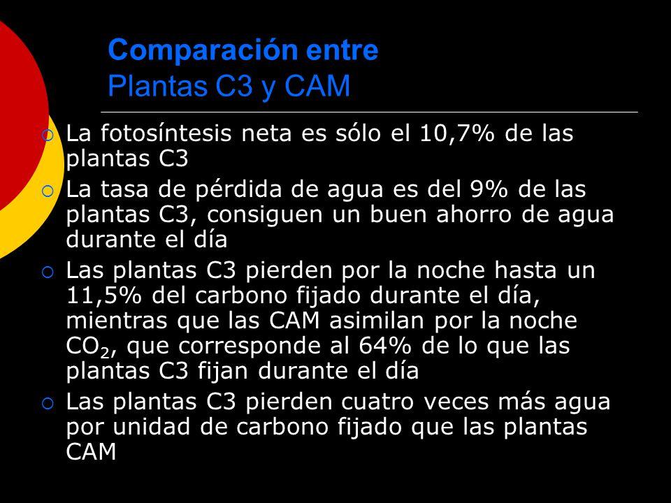 Comparación entre Plantas C3 y CAM