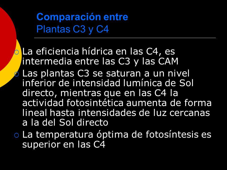 Comparación entre Plantas C3 y C4