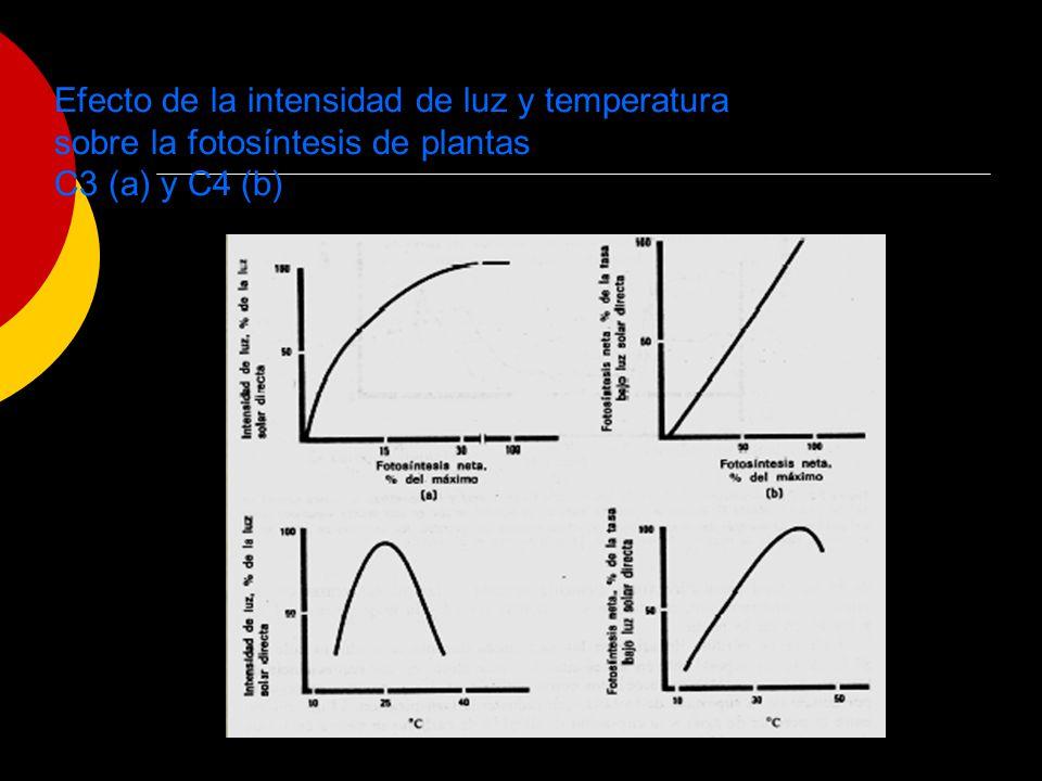 Efecto de la intensidad de luz y temperatura sobre la fotosíntesis de plantas C3 (a) y C4 (b)