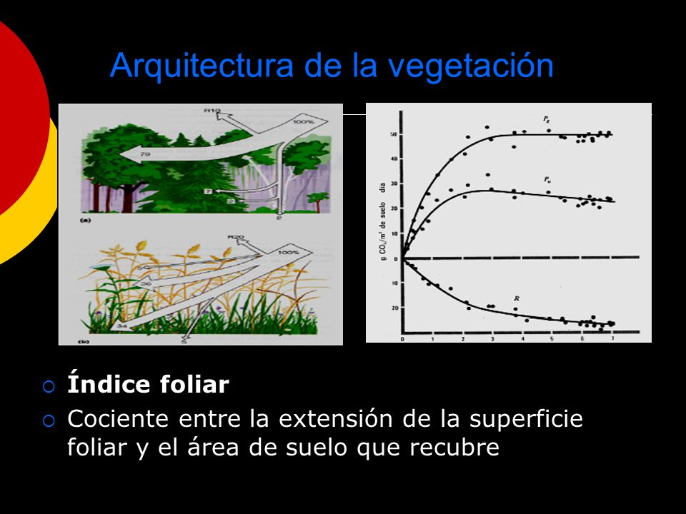 Arquitectura de la vegetación