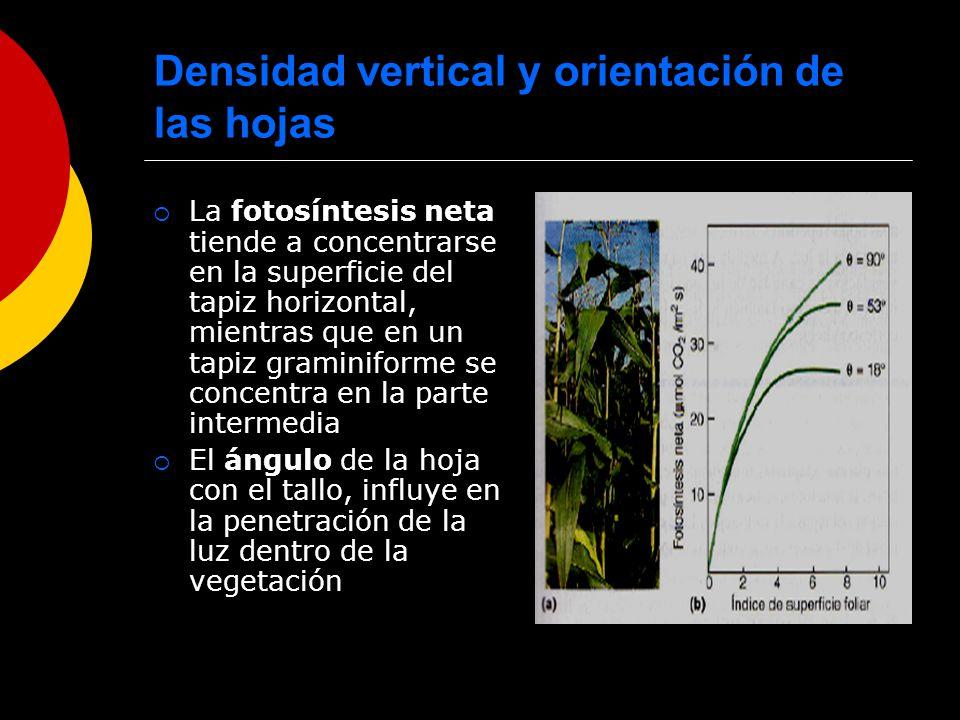 Densidad vertical y orientación de las hojas