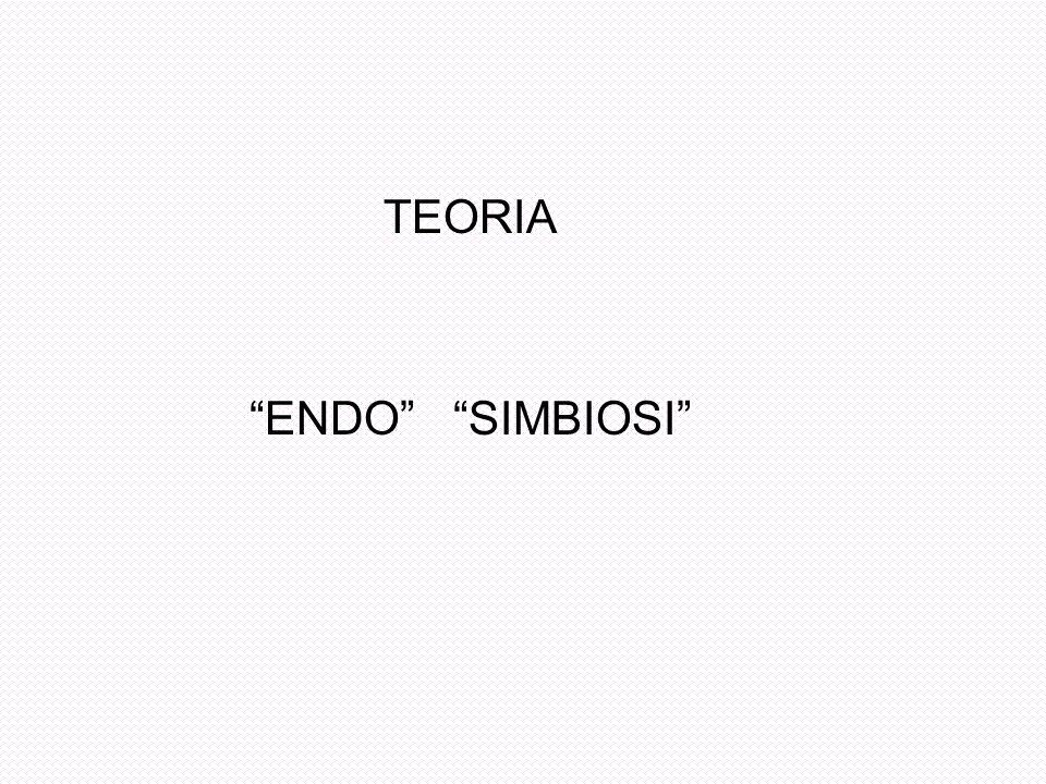 TEORIA ENDO SIMBIOSI