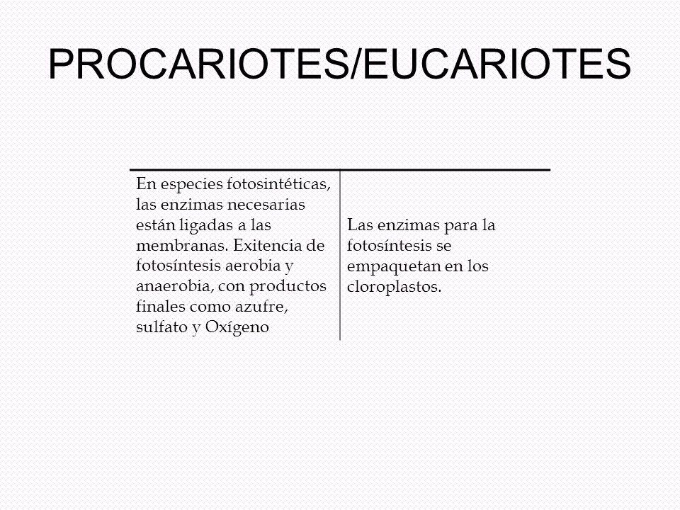 PROCARIOTES/EUCARIOTES