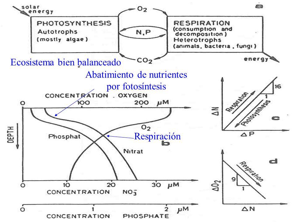 Abatimiento de nutrientes por fotosíntesis
