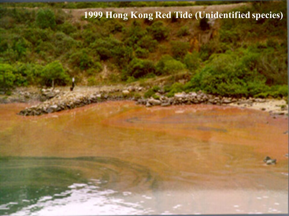 1999 Hong Kong Red Tide (Unidentified species)
