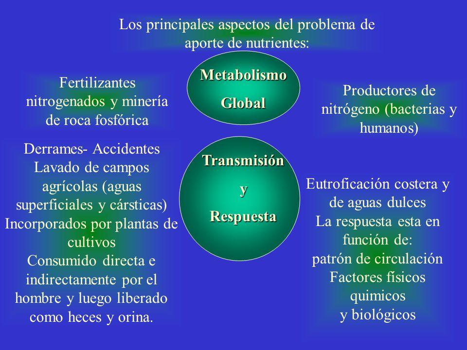 Metabolismo Global Transmisión y Respuesta