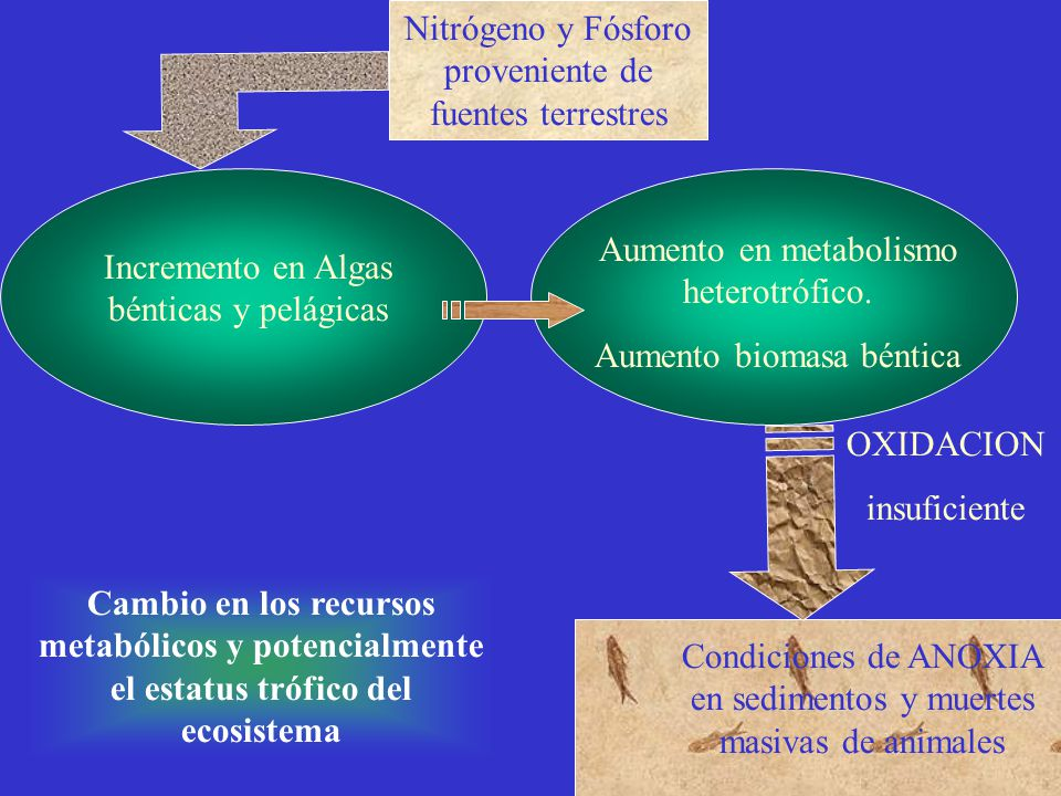 Nitrógeno y Fósforo proveniente de fuentes terrestres