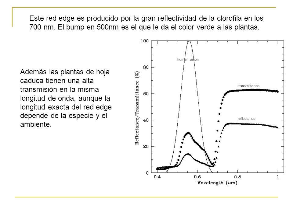 Este red edge es producido por la gran reflectividad de la clorofila en los 700 nm. El bump en 500nm es el que le da el color verde a las plantas.