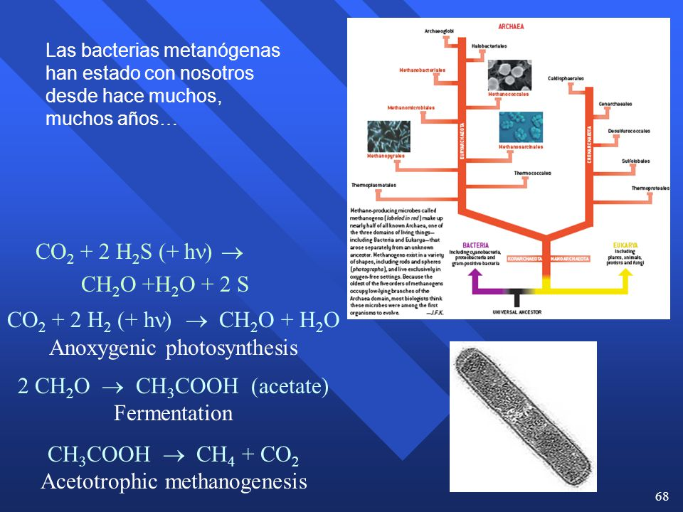 Anoxygenic photosynthesis 2 CH2O  CH3COOH (acetate) Fermentation