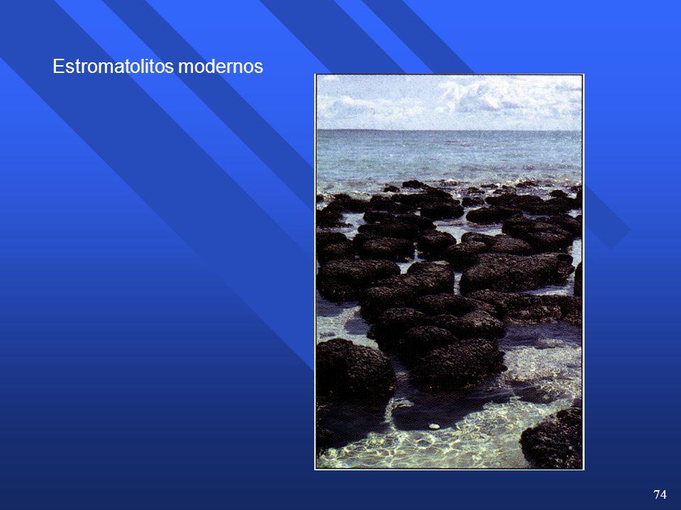 Estromatolitos modernos