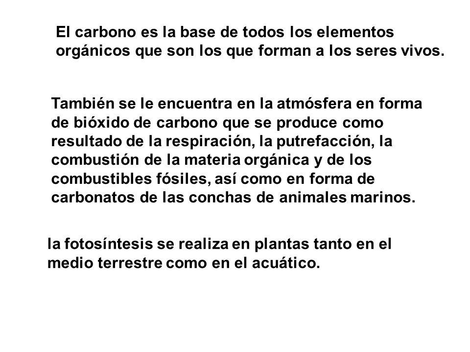 El carbono es la base de todos los elementos orgánicos que son los que forman a los seres vivos.