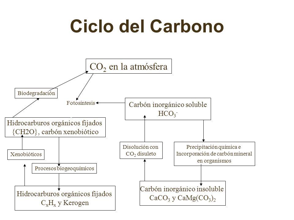 Ciclo del Carbono CO2 en la atmósfera Carbón inorgánico soluble HCO3-