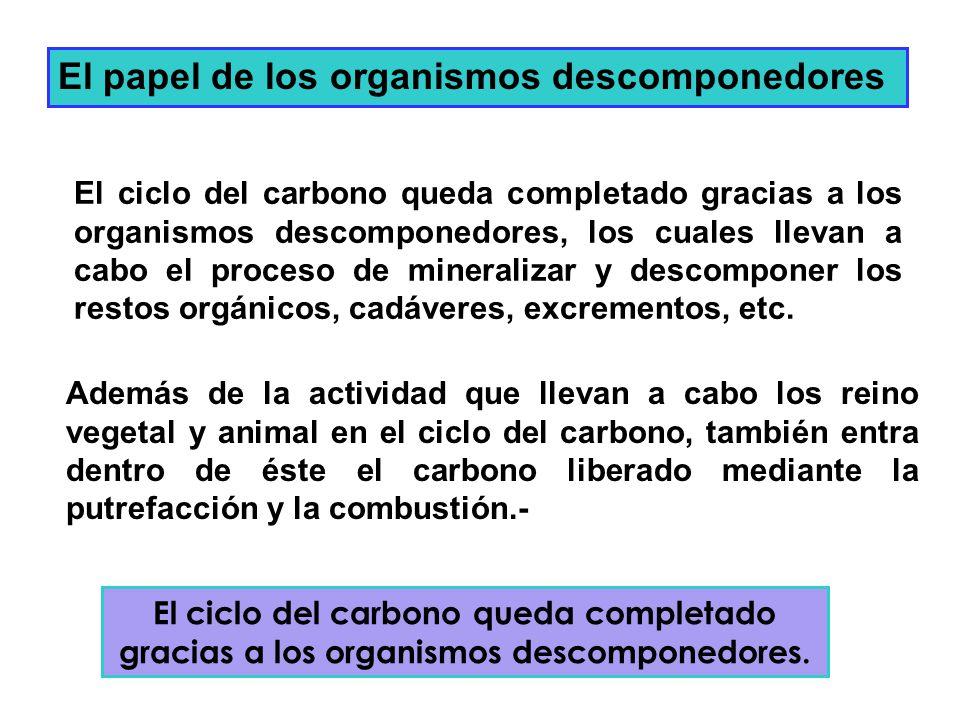 El papel de los organismos descomponedores