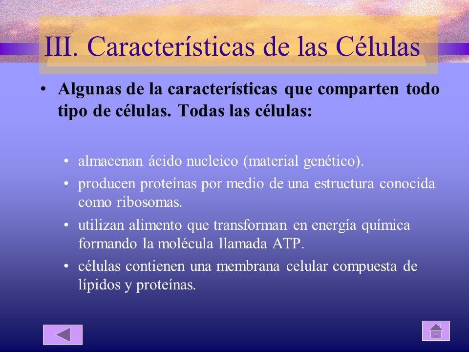 III. Características de las Células