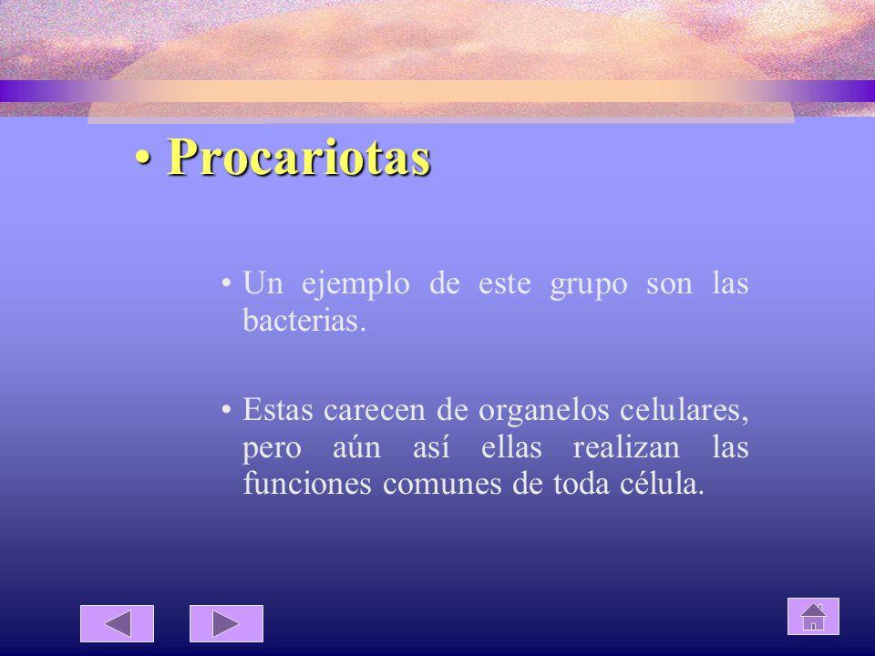 Procariotas Un ejemplo de este grupo son las bacterias.