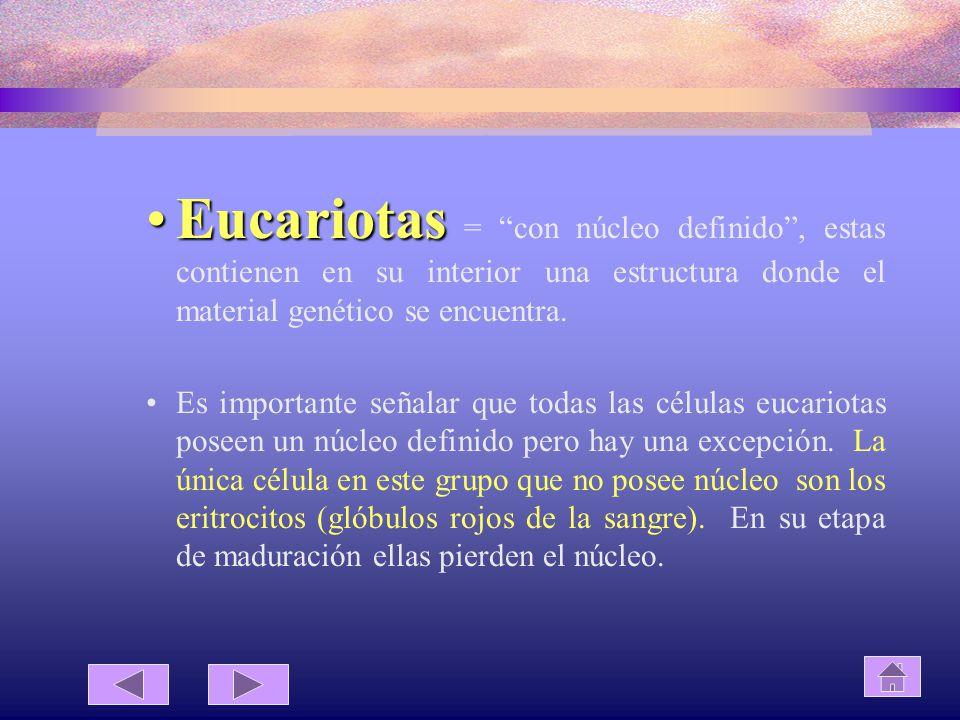 Eucariotas = con núcleo definido , estas contienen en su interior una estructura donde el material genético se encuentra.