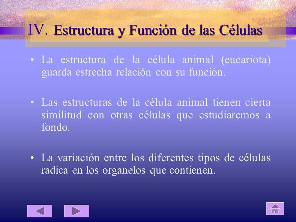 IV. Estructura y Función de las Células