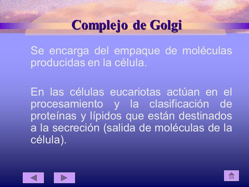 Complejo de Golgi Se encarga del empaque de moléculas producidas en la célula.