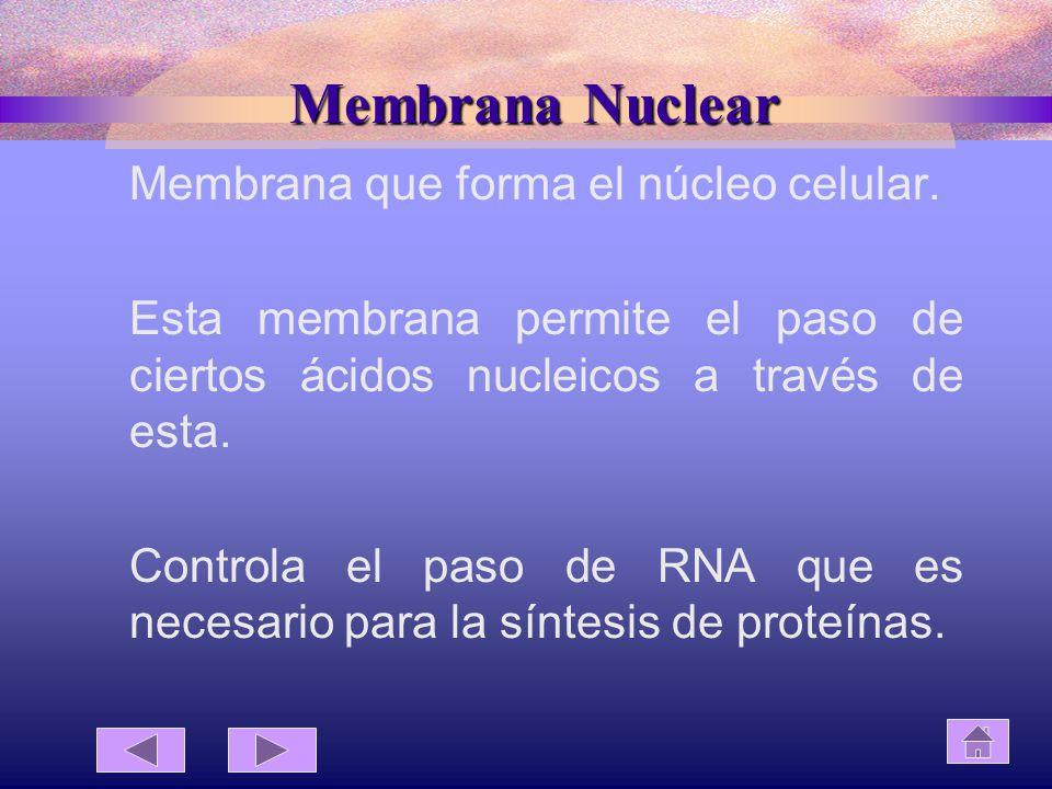 Membrana Nuclear Membrana que forma el núcleo celular.