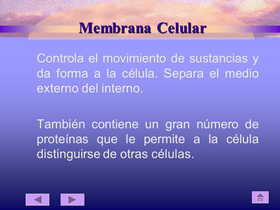 Membrana Celular Controla el movimiento de sustancias y da forma a la célula. Separa el medio externo del interno.