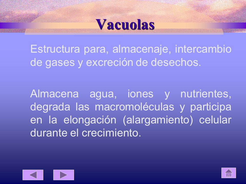 Vacuolas Estructura para, almacenaje, intercambio de gases y excreción de desechos.