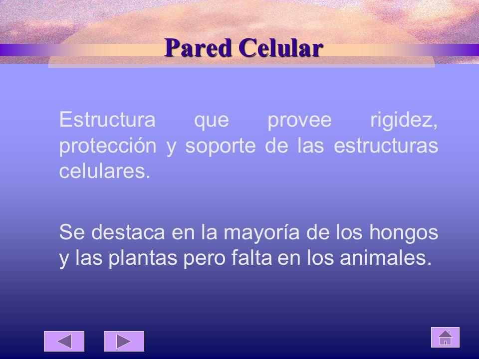 Pared Celular Estructura que provee rigidez, protección y soporte de las estructuras celulares.