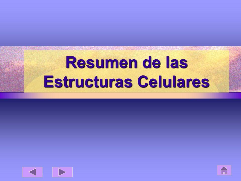 Resumen de las Estructuras Celulares