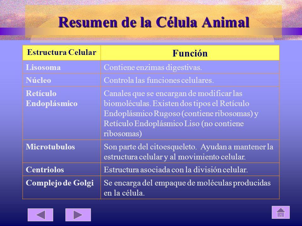 Resumen de la Célula Animal