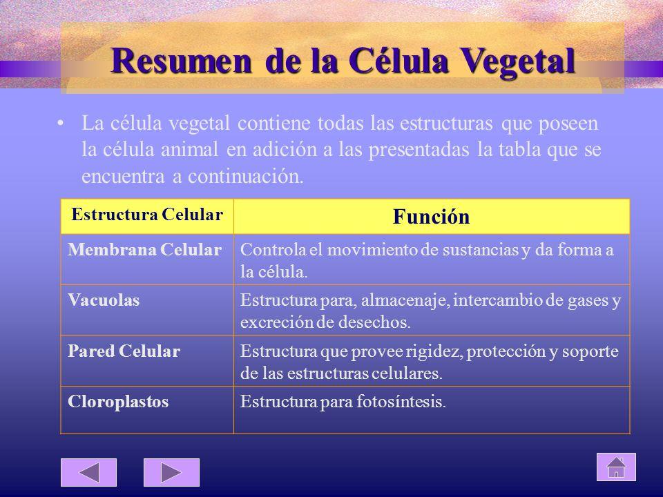 Resumen de la Célula Vegetal