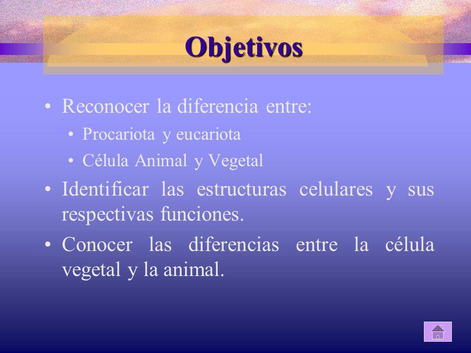 Objetivos Reconocer la diferencia entre: