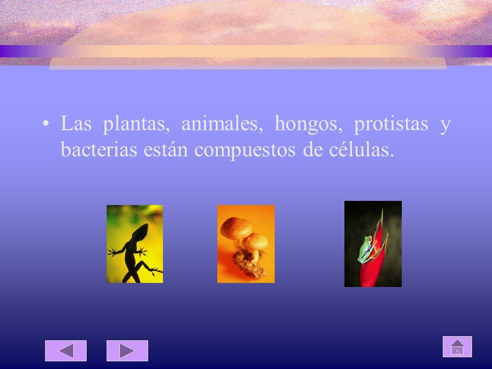 Las plantas, animales, hongos, protistas y bacterias están compuestos de células.