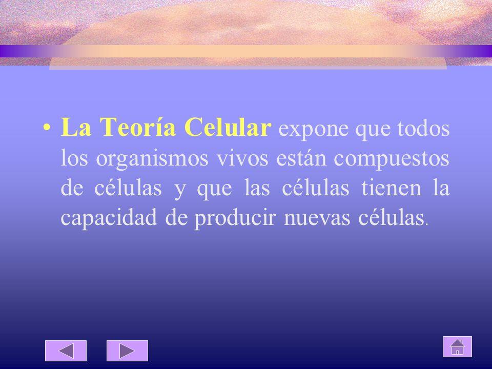 La Teoría Celular expone que todos los organismos vivos están compuestos de células y que las células tienen la capacidad de producir nuevas células.
