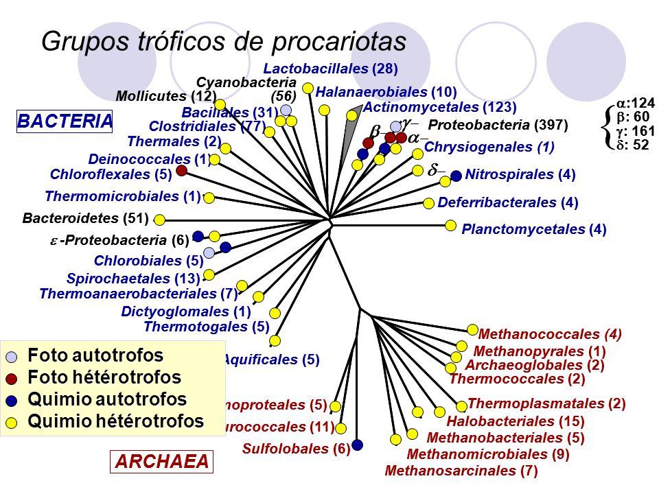 Grupos tróficos de procariotas