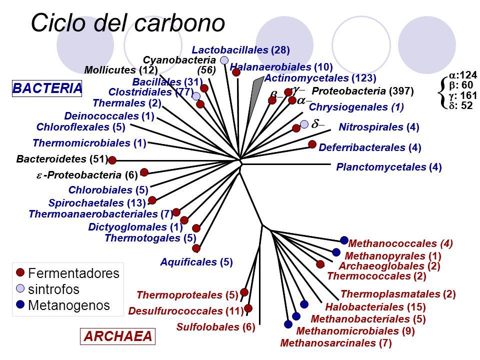 { Ciclo del carbono g- d- ARCHAEA BACTERIA a- b- Fermentadores