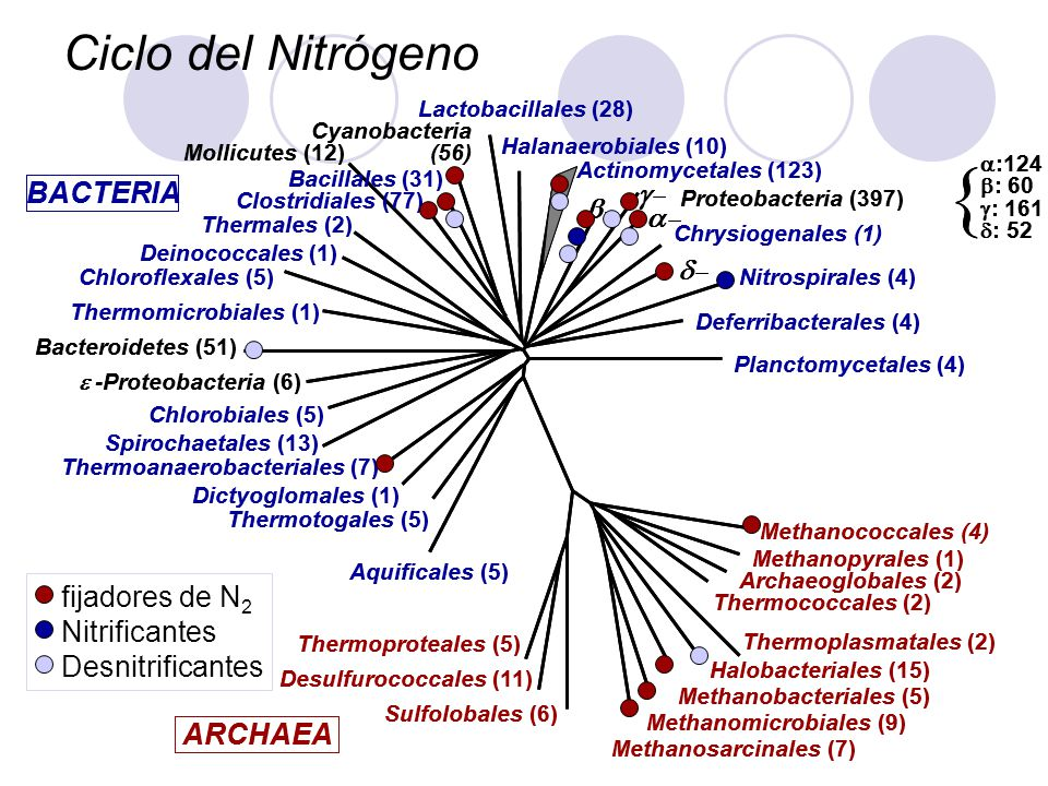 { Ciclo del Nitrógeno g- d- ARCHAEA BACTERIA a- b- fijadores de N2