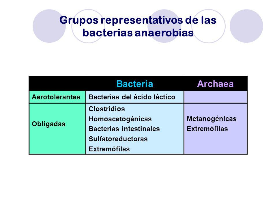 Grupos representativos de las