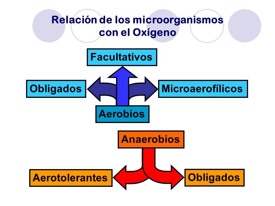 Relación de los microorganismos