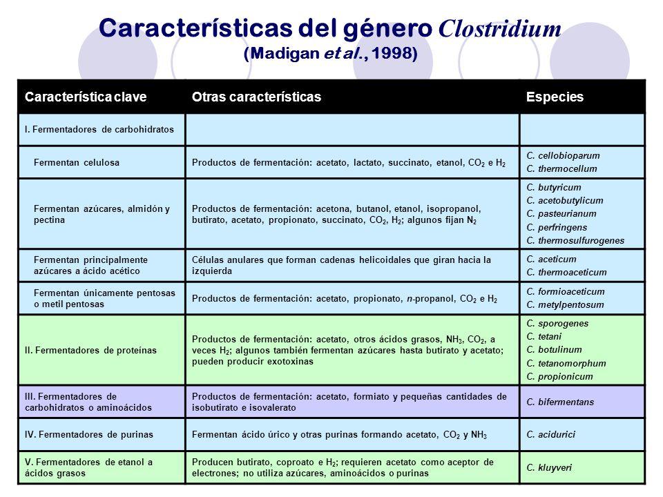 Características del género Clostridium